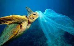 Policies on Plastics Around the World