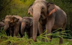 Promotion: Save the Elephants!
